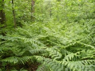 Dschungelprüfung
