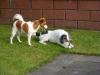 Lotte und Ryno