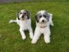 Ryno und Bailey