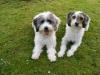 Bailey und Ryno