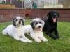 Ryno, Bailey und Findus