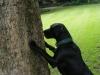 Leckerchen vom Baum
